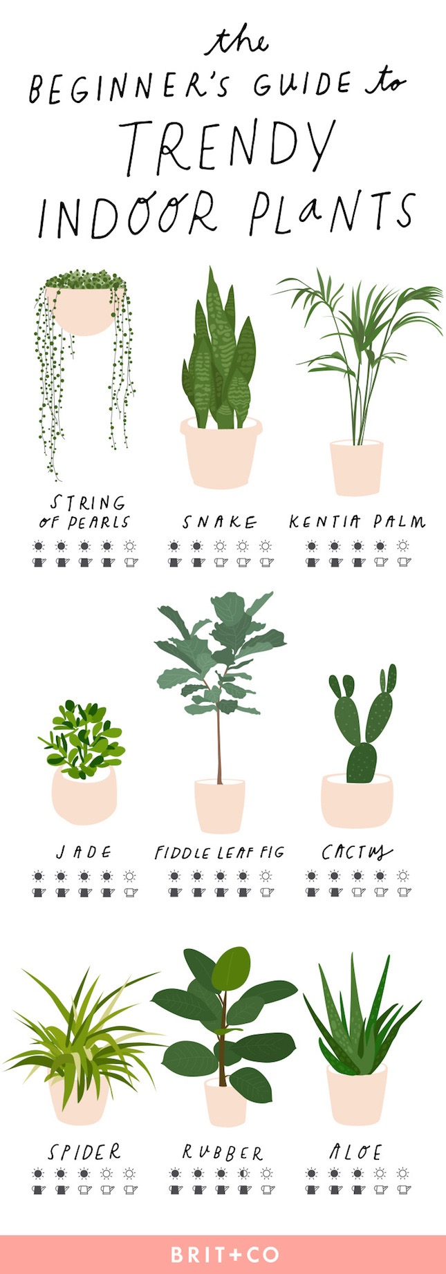 Ultimate-Guide-Trendy-Indoor-Plants-11